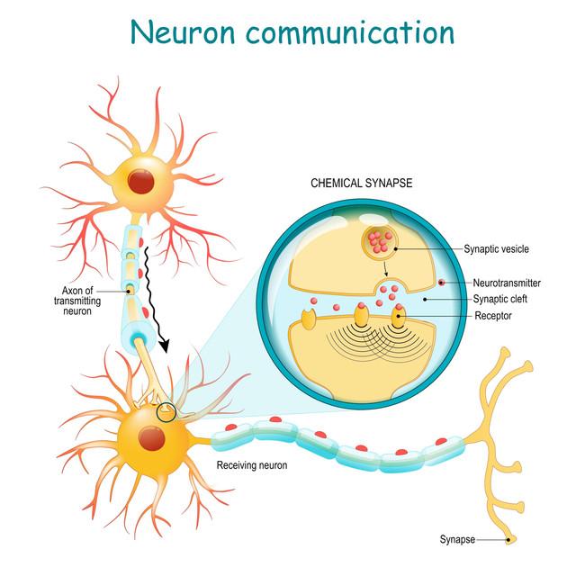 neuron-communication