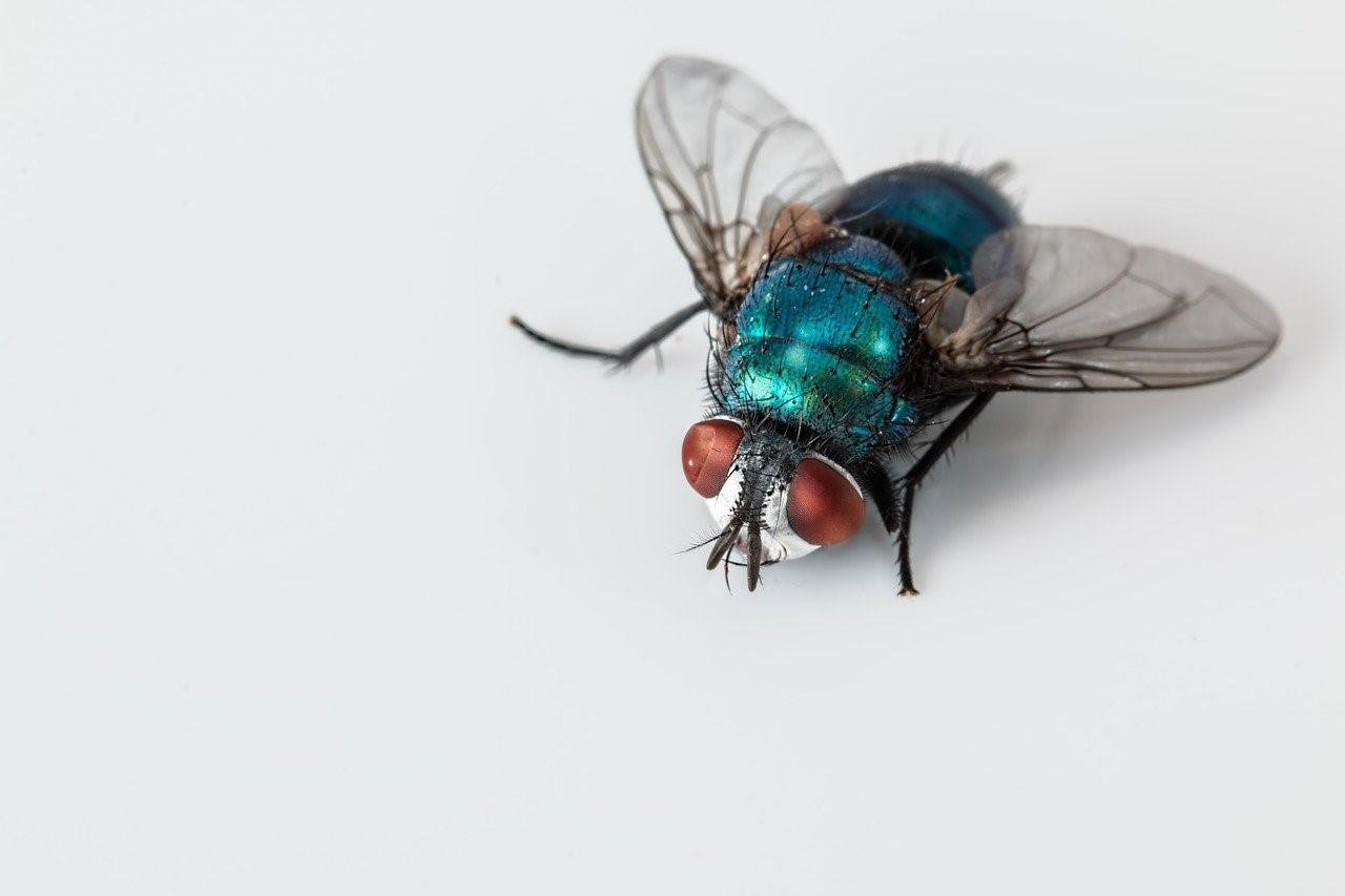 Organic Ideas for Keeping Flies Away