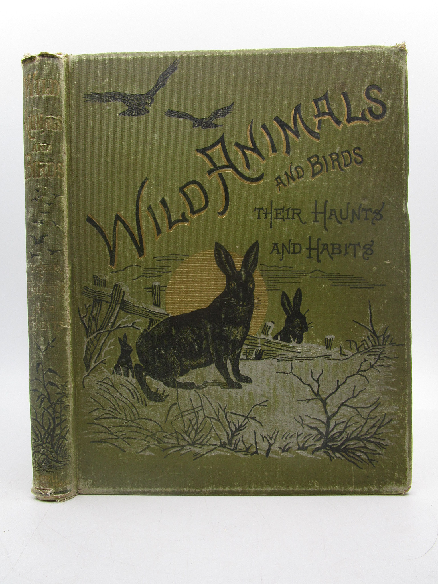 Image for Wild Animals and Birds: Their Haunts and Habitats