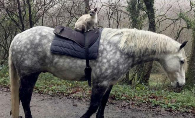 Кот вырос на конюшне