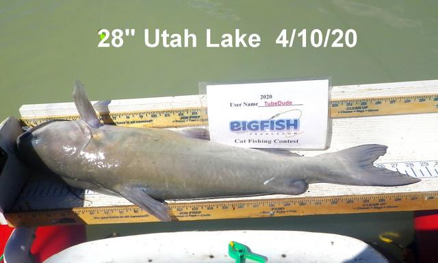 28-IN-CONTEST-FISH