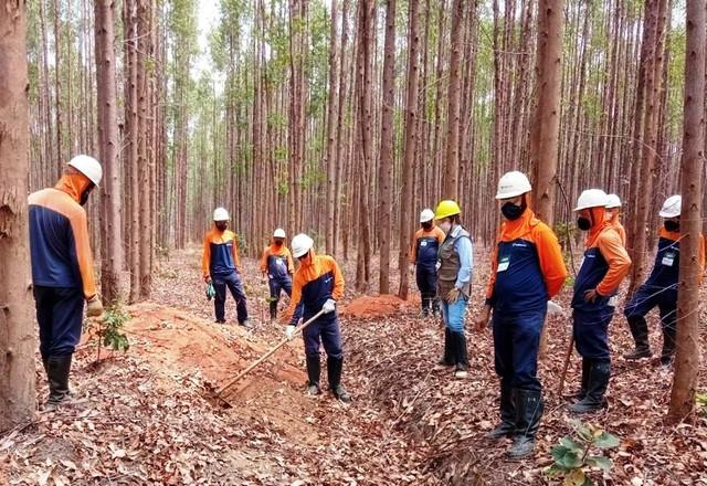 Trabalhadores aprendem a combater formigas para proteger eucaliptos em Minas Gerais - SENAR MINAS