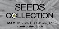 Seeds Collection.png