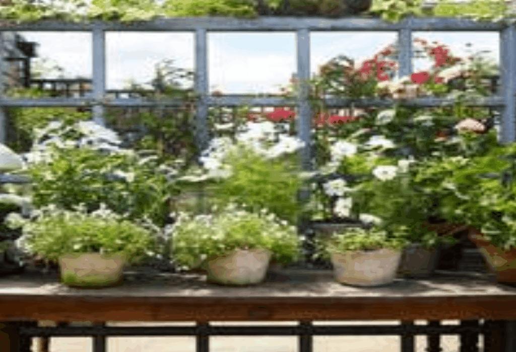 Gardening Tips Ikeda