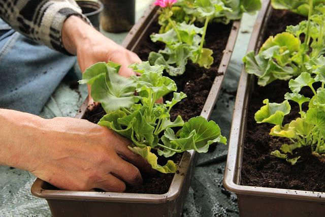 plant-5375842-640-1