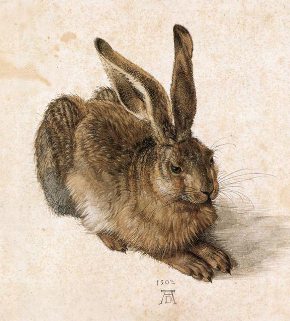 Albrecht-D-rer-a-young-hare.jpg