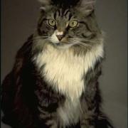ZV-dmstc083-curious-cat