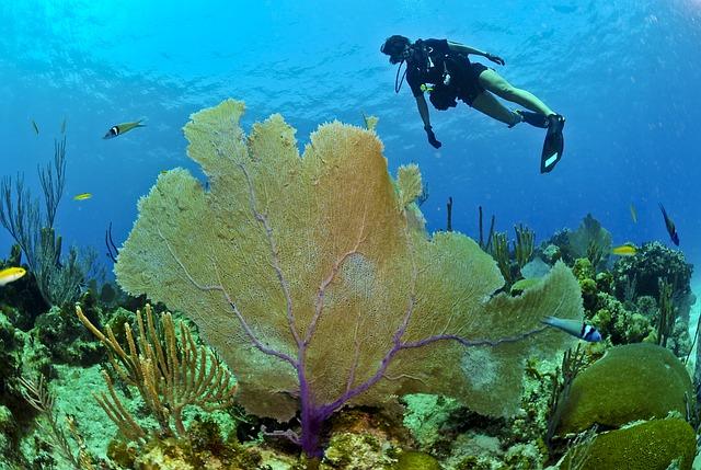diver-79597-640