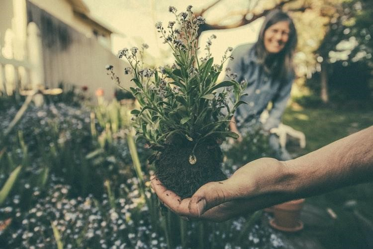 5 Superb Aging Benefits of Community and Home Gardening