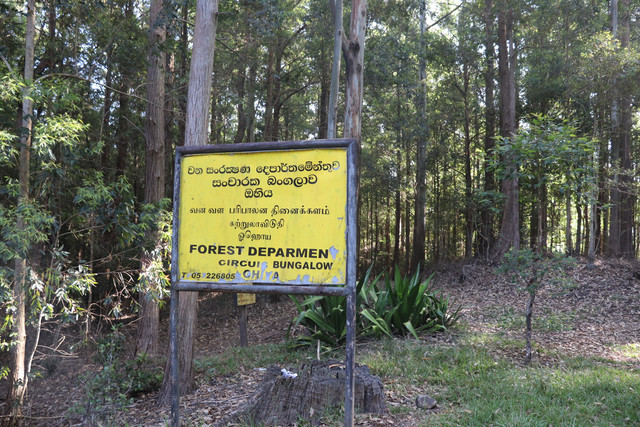 ohiya-forest-bungalow