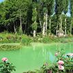 https://i.ibb.co/B4dDT2Y/tinypic-green-pond.png