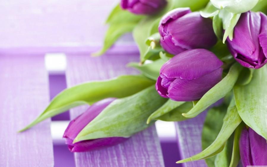 bouquettulipswallpapers61032687933-yapfiles-ru