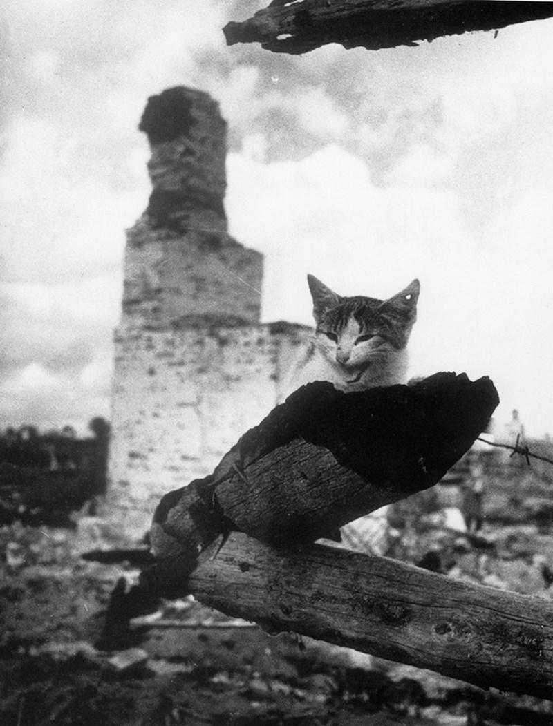 жизнь советской эпохи в фотографиях 47
