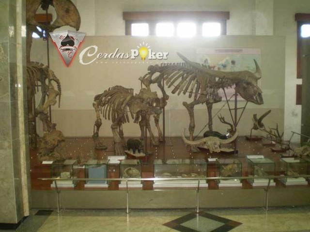 Belajar Soal Nyamuk sampai T-Rex di Natural History Museum