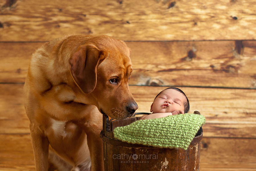 Когда собаки большие, а дети маленькие - 44 потрясающие фотографии - 20