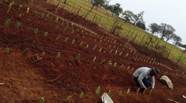 AgroNordeste: produtores em Minas Gerais mostram satisfação com a palma forrageira - SENAR MINAS