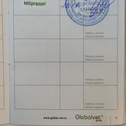 Москва, Сафира, сука 13.07.2017 г.р. O0-Prf-Zq-Agd-Q