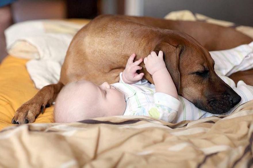 Когда собаки большие, а дети маленькие - 44 потрясающие фотографии - 39