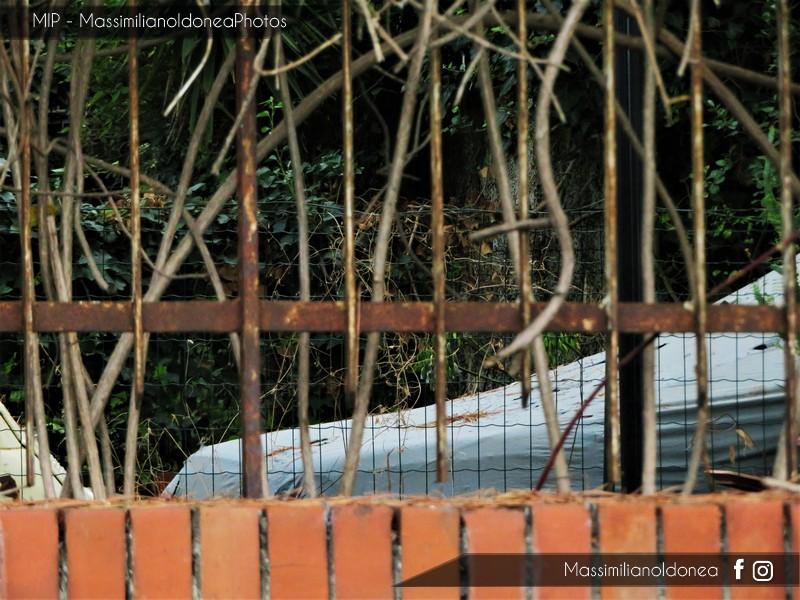 Auto Abbandonate - Pagina 7 Fiat-500-5