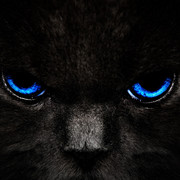 cat-eyes-blue-143433-3840x2400