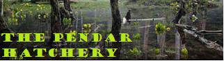 pendar-banner.png