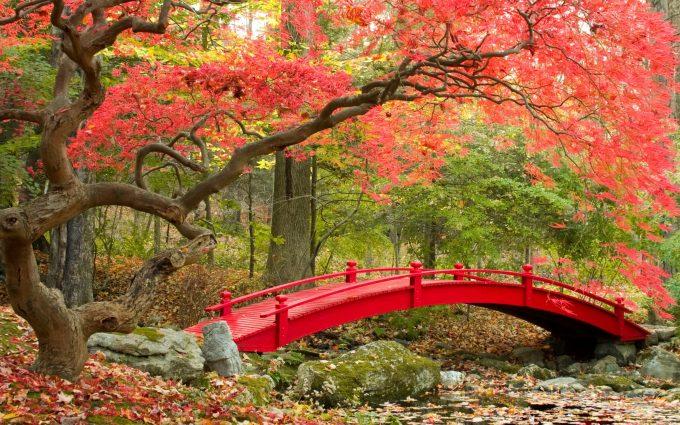 [Image: Autumn-3840x2160-maple-trees-japanese-ga...80x425.jpg]