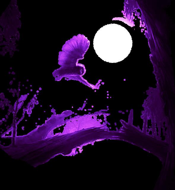 owl-1526555132644-9407