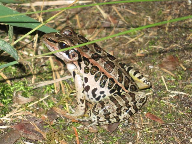 frog-in-yard