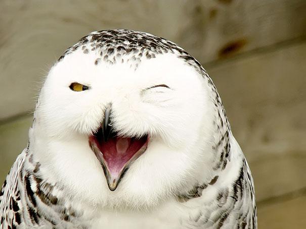 30 фотографий самых счастливых животных на планете-17