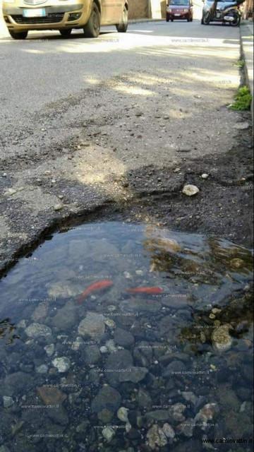 Come risolvere le buche di roma Pesci-nelle-buche-stradali