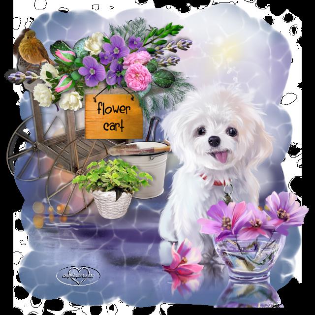 """Iniziativa grafica insieme Maggio 2021 """"Garden"""" - Pagina 4 Giardino-maggio"""