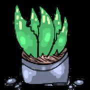 Aloe-Vera-Sig.png