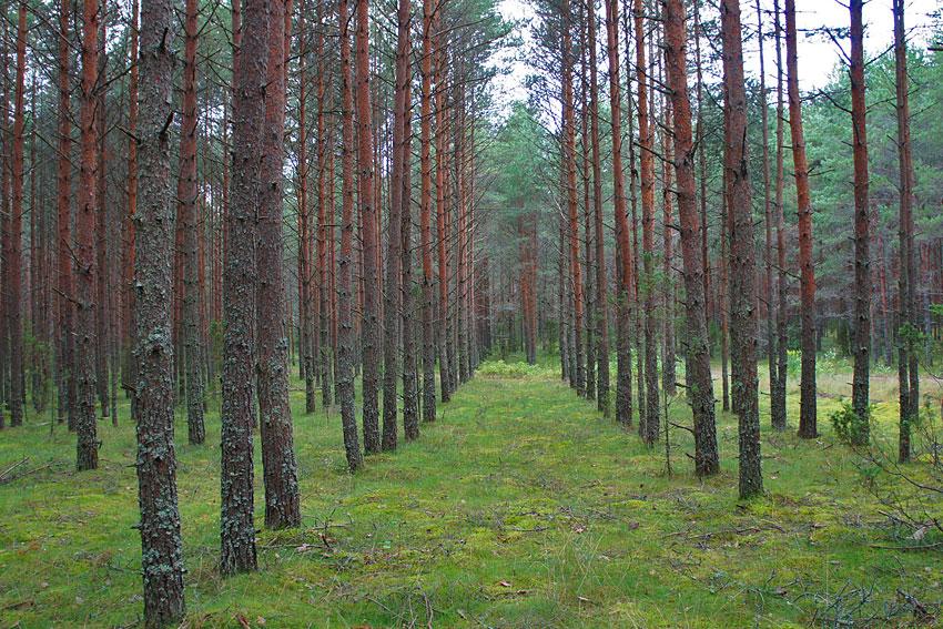 130819-woods-12