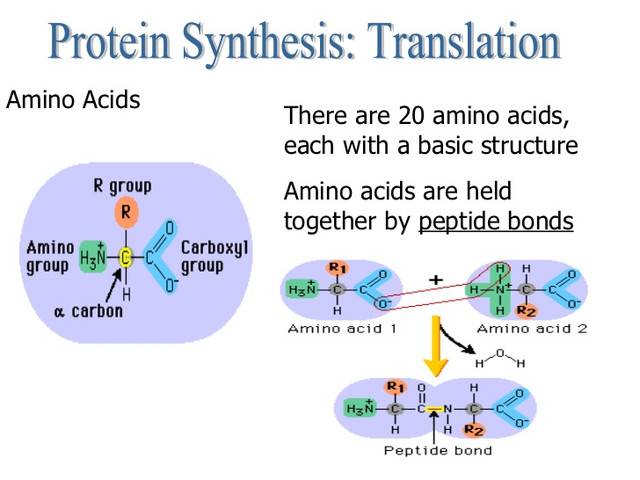 central-dogma-and-protein-synthesis-28-7