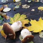 26 сентября в приходском экопарке при храме Св. мч. Уара посёлка Вешки Мытищинского округа первое занятие Лесной дружины под руководством Борцовой Марии Николаевны. Ребята занимались фенологическими наблюдениями, наблюдали за животными, изучали грибы