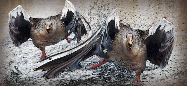greylag goose 1280 Medium