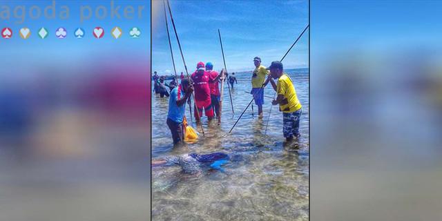Snap Mor, Tradisi Tangkap Ikan Masyarakat Biak yang Terus Dilestarikan