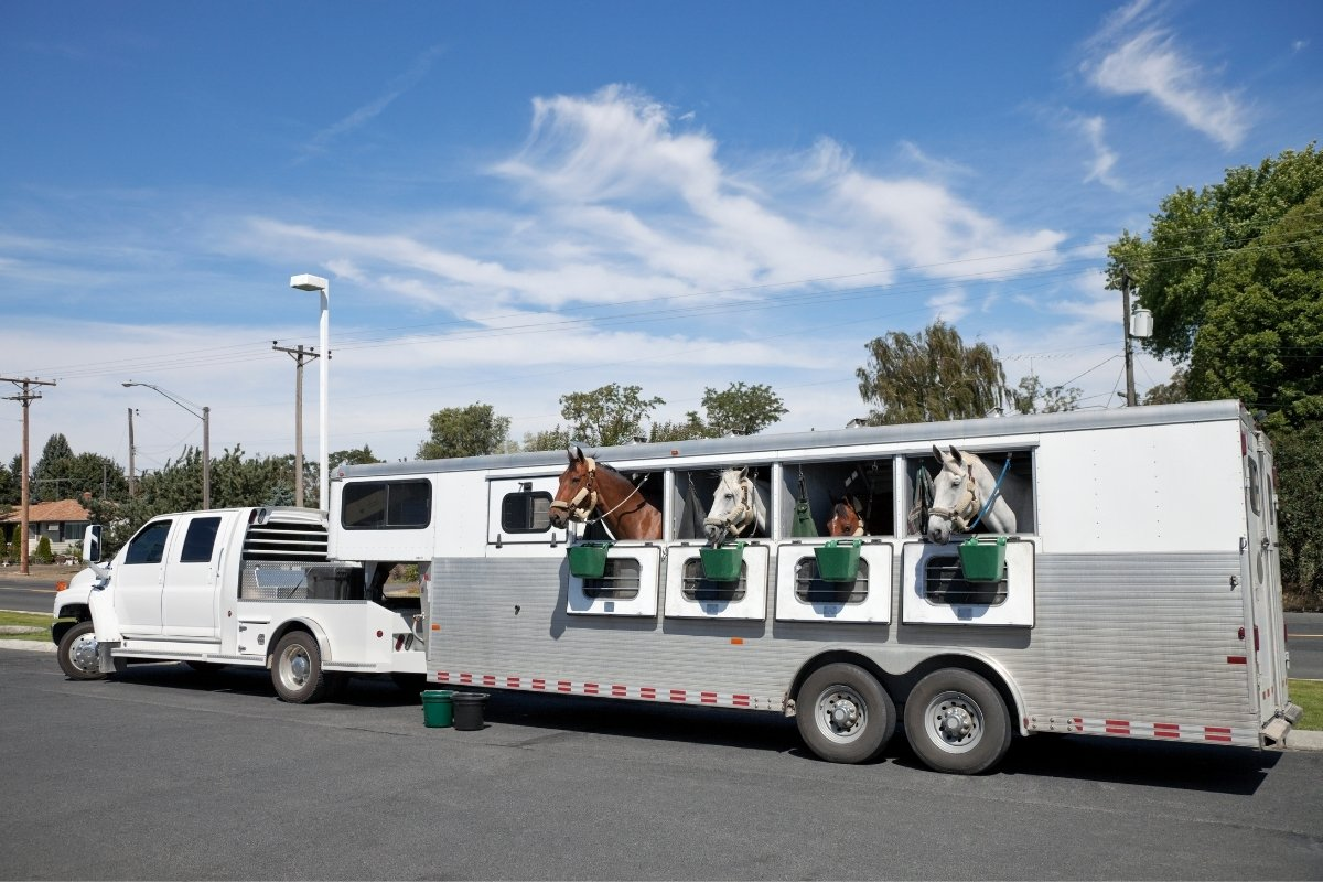 Why you need Horse Trailer Insurance ?
