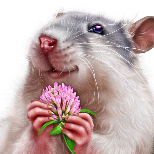 leprechaun-rat-16.png