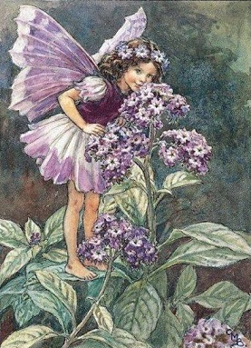 figurines-cicely-mary-barker-flower-fairy-fantasy-art-heliotrope-86803jpg-image-600x600
