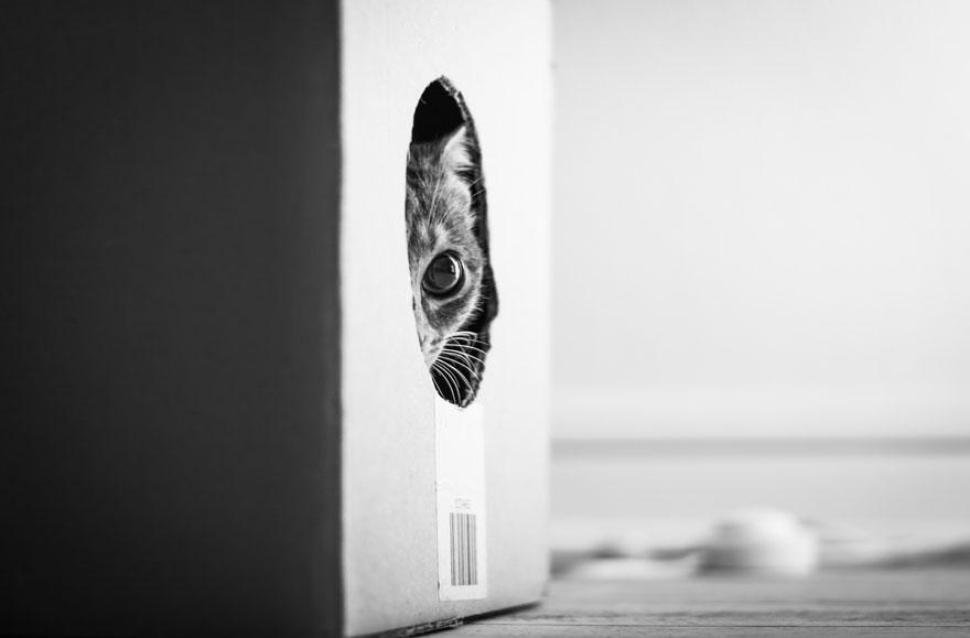 Таинственная кошачья жизнь в чёрно-белых фотографиях-5