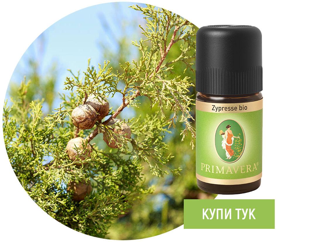 Kiparis-essential-oil-Primavera
