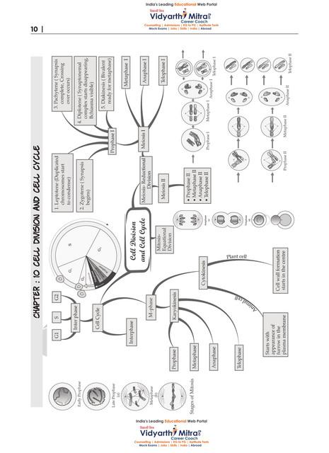 11th-Bio-Mindmaps-11