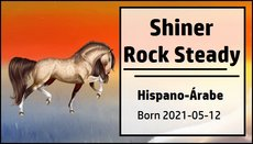 Shiner_Rock_Steady.jpg