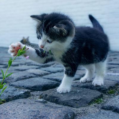 flowercat.jpg