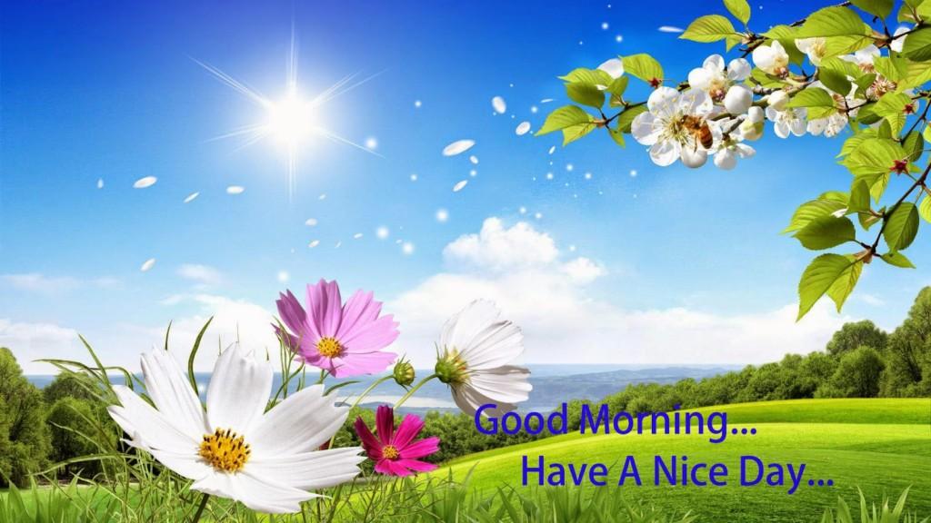 beautiful-cute-morning