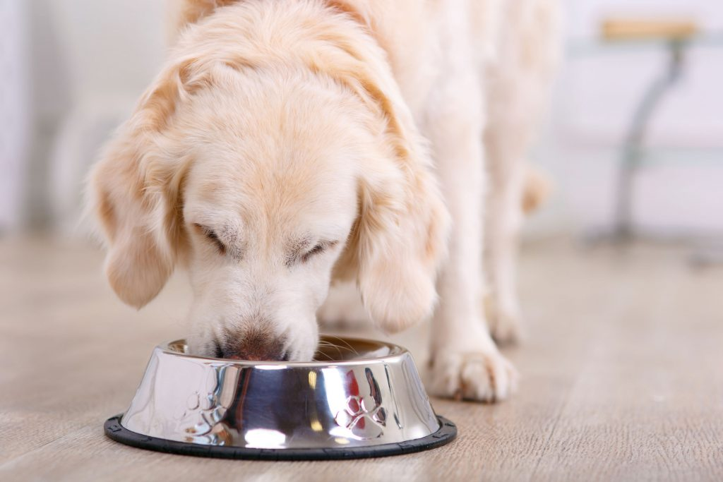 Dog Feeders: Which One Is The Best Of 2021?