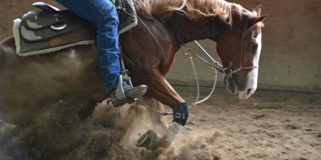 Ausbildung eines Pferdes: vom Durchbruch bis zum Training,