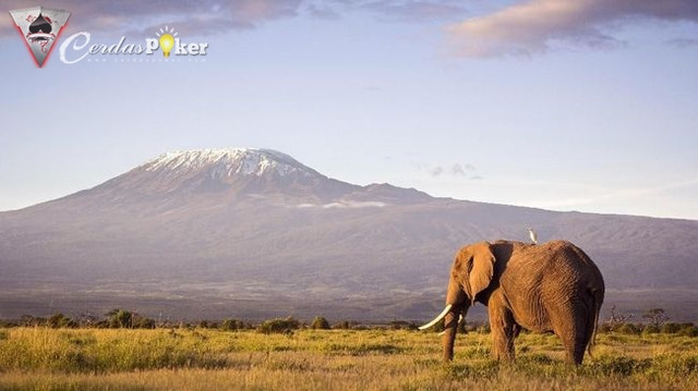 Afrika Tanzania Objek Wisata Alam Selain Kilimanjaro