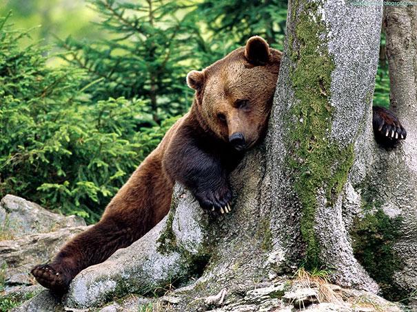 Медведи, такие медведи-20